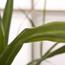 inspirace-rostliny